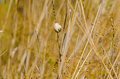 Free One Small Snail Holding On Plant Stem. Nature Drought Background Royalty Free Stock Photos - 30314908