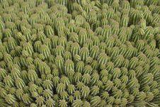 Free Cactus Stock Image - 30314331