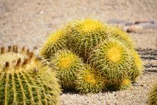 Free Barrel Cactus Royalty Free Stock Images - 30314769