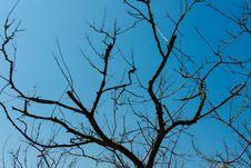 Free Silhouette Of Dried Trees On A Cloudless Blue Sky Background Royalty Free Stock Photos - 30316118