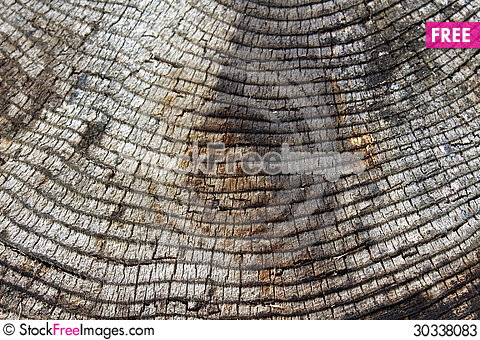 Free Telling The Age Of A Tree Stock Photos - 30338083