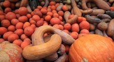 Free Pumpkin Royalty Free Stock Images - 30338229