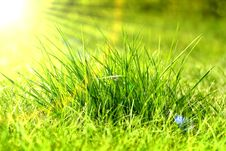 Free Green Grass Royalty Free Stock Images - 30338329