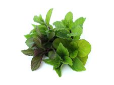 Free Different Types Of Mint Stock Photography - 30338372