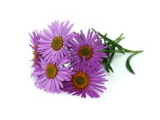 Free Alpine Aster Royalty Free Stock Images - 30338459
