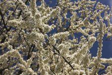 Free Spring Tree Stock Image - 30340141