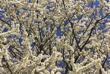 Free Spring Tree Stock Images - 30340144