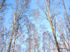 Trees And Blue Sky Stock Photo