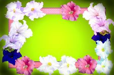 Free Spring Flowers Frame Royalty Free Stock Photography - 30340857