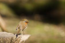 Free Robin On Log Stock Image - 30341491