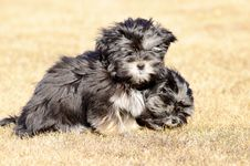 Free Two Siblings Dogs Royalty Free Stock Photos - 30343078