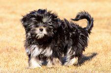 Free Mixed Breed Dog Stock Photo - 30343130