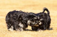 Free Two Siblings Dogs Royalty Free Stock Photos - 30343358