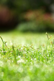 Free Fresh Spring Green Grass Stock Photography - 30348682