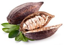 Free Cocoa Pod Stock Images - 30352194