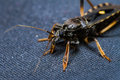 Free Assassin Bug Stock Images - 30361794