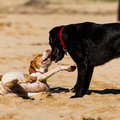 Free Dogs Royalty Free Stock Photos - 30363978