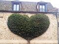 Free Heart Tree Royalty Free Stock Image - 30365776