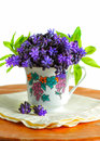 Free Grape Hyacinths Flowers Royalty Free Stock Photography - 30366387
