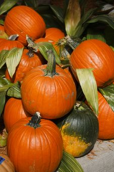 Free Pile O  Pumpkins Royalty Free Stock Photography - 30362317
