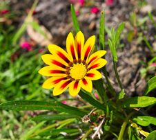 Free Yellow-red Flower Stock Photography - 30362752