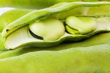 Free Broad Beans In A Pod Royalty Free Stock Images - 30368439