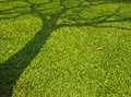 Free Shadow Tree Royalty Free Stock Photo - 30374095