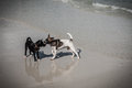 Free Thai Dogs Play On Beach Royalty Free Stock Photos - 30375078