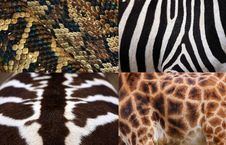 Free Detail Zebras Stock Images - 30370724