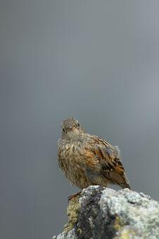 Bird On A Rock Stock Photos