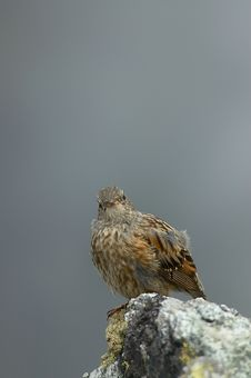 Free Bird On A Rock Stock Photos - 30376303