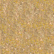 Free Seamless Texture Of Bark. Royalty Free Stock Photo - 30389035