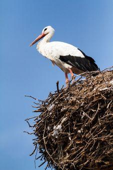 Free Stork Stock Image - 30389931