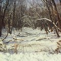 Free Winter Woodland Perspective Royalty Free Stock Image - 30396056