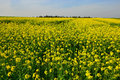 Free Yellow Flower Views Royalty Free Stock Image - 30398686