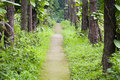 Free Garden Path Royalty Free Stock Photo - 30399795