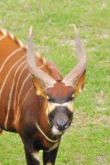Bongo Headshot