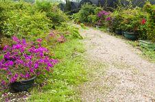 Free Garden Path Royalty Free Stock Photos - 30399438
