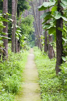 Free Garden Path Royalty Free Stock Image - 30399796