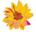 Free Flower Royalty Free Stock Image - 3040946