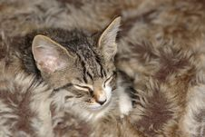 Free Sleeping Kitty Stock Images - 3040494