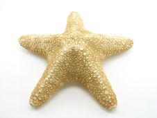 Free Starfish Royalty Free Stock Photography - 3043617