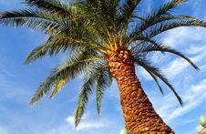 Free Palm Tree Royalty Free Stock Photography - 3045867