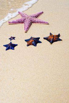 Starfishes Stock Photos