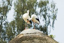Free Stork Couple Stock Images - 3047244