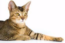 Free Kitten In Studio Stock Photography - 3047552