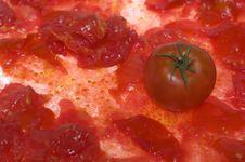 Free Tomato 1 Stock Image - 3048911