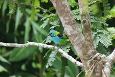 Free Colorful Tropical Bird Royalty Free Stock Photography - 3049047