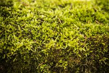 Green Moss Abstract Background Royalty Free Stock Images