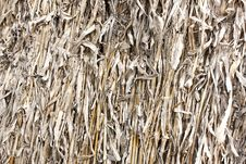Free Background - Dried Corn Stalks Royalty Free Stock Photography - 30406837